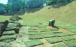 Plantar Grama esmeralda