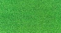 Comprar grama Coreana em Barão de Antonina SP