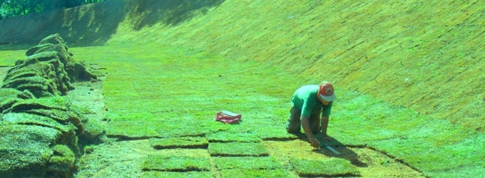 Cote preço de gramas na região de Mara Rosa GO