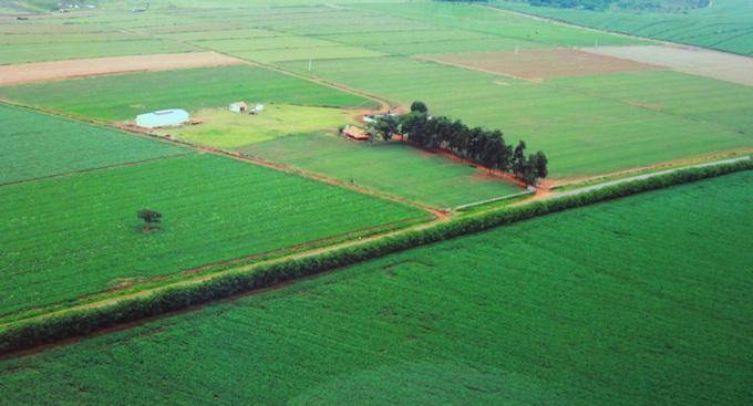 Comprar grama em todo o Brasil
